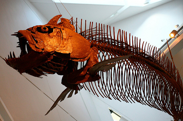 ROM Admission to see the dinosaurs - ancient fish skeleton